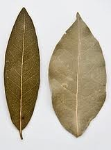 MSC Bay Leaves